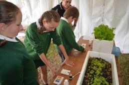 Soil pH testing