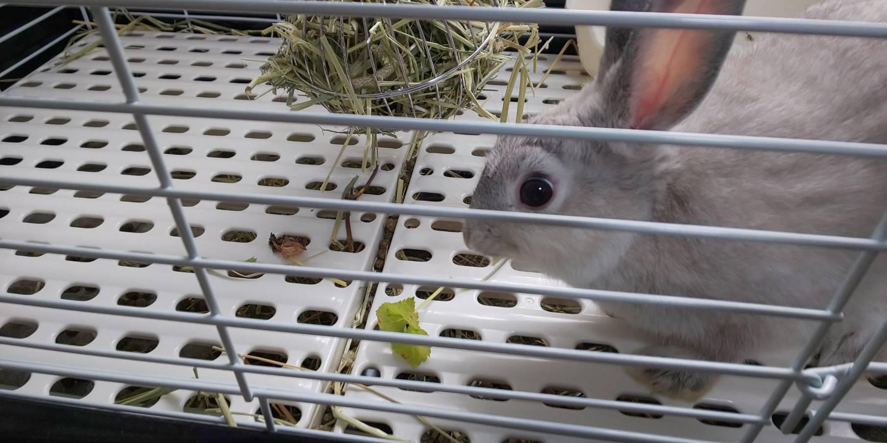 やはり俺のミニウサギは間違っている。 ①