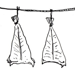 Two dried codfish