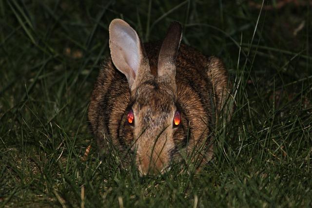 Evil Bunny Animal - Image: Public Domain, Pixabay