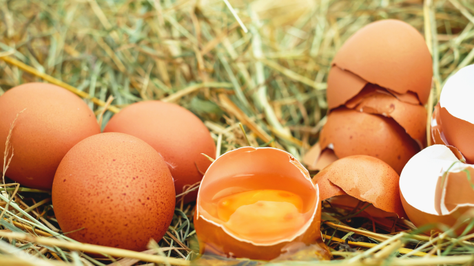 Eggs are a great food source of vitamin D!