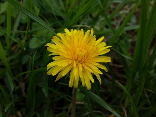 Flower Spot Metering Mode