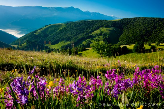 Wildflowers Mountains Monti Sibillini Umbria Italy Photography Workshop Tour