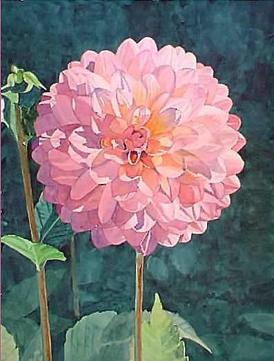 Dahlia, 30x22, Watercolor on paper - Sold
