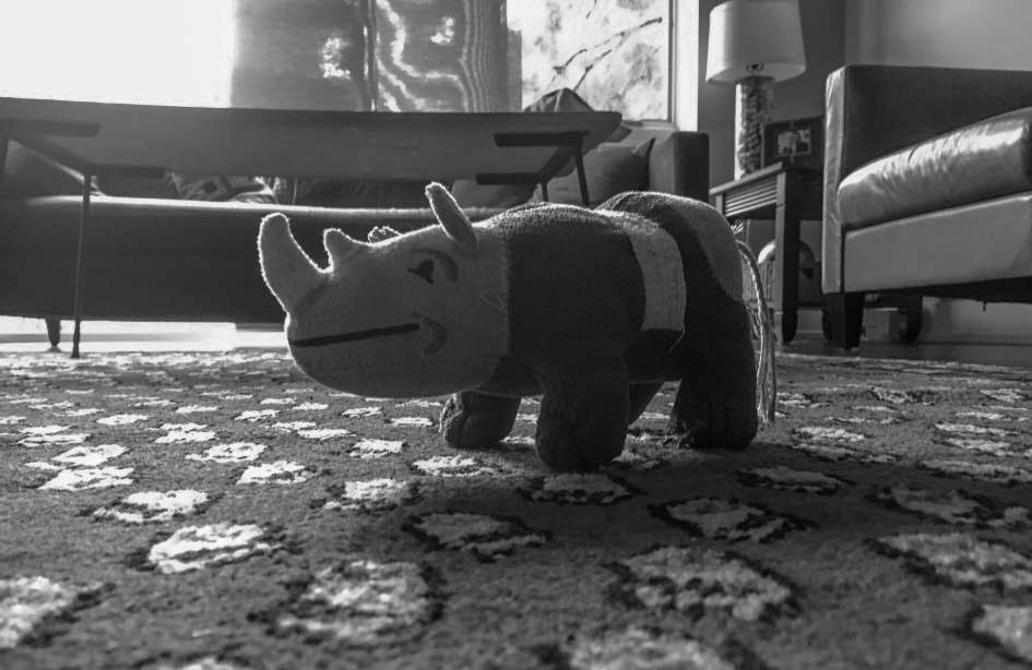 Scrappy Toy Rhino on Carpet - Dog Toy - Dog Photography