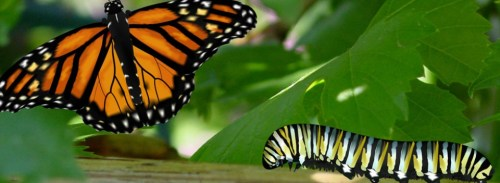 butterfly_transform-980x360