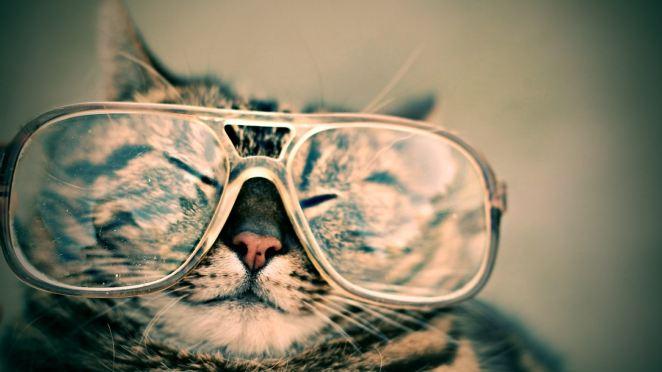 NERD CAT LIKES RENOVATION LENDING