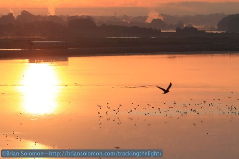Morning_glint_at_Glounthaune_2600_outbound_silo_with_birds_IMG_9028