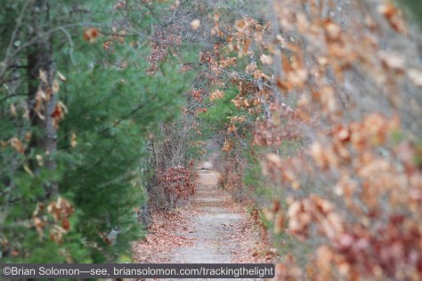 The old Boston & Maine line through Belchertown was abandoned in the 1930s in favor of trackage rights over the parallel Central Vermont. Today the old right of way is a bicycle path. Canon EOS 7D with 200mm lens.