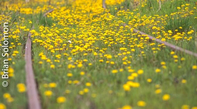 Tracks in Spring.