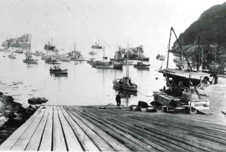 hc-trinidad-whaling-19201