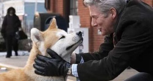 hachi-dog
