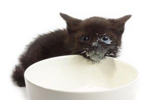 cat and milk