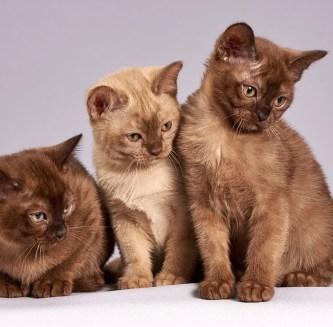 Tre-bei-gatti