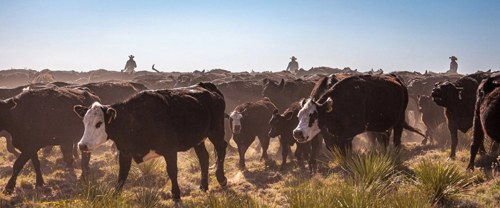 smith ranch - 050621-1225-2