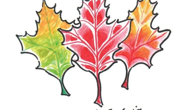 The Chase: Autumn, Again!