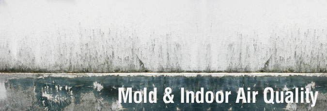 Indoor Mold