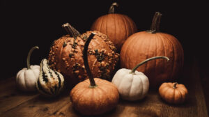 Plan your October social content with GoDaddy Studio
