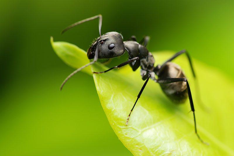 Comment se débarasser des fourmis