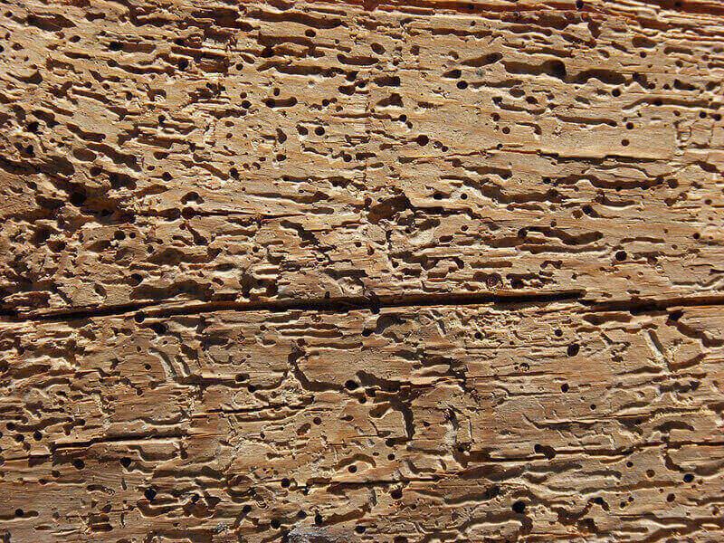 madera afectada por los insectos xilófagos