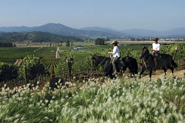 Image result for chile wine country