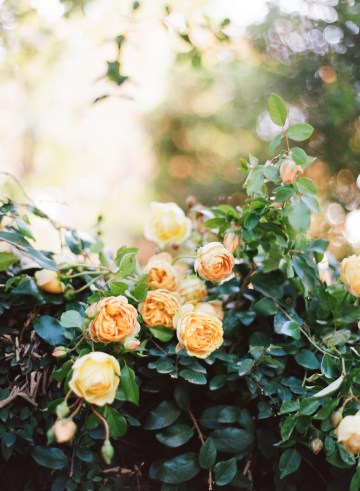 Rustic Fall Wedding Inspiration by Sylvia Gil Photography and Kate Siegel 28