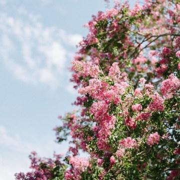 Dreamy Pink Wedding In France | Marion Heurteboust 14