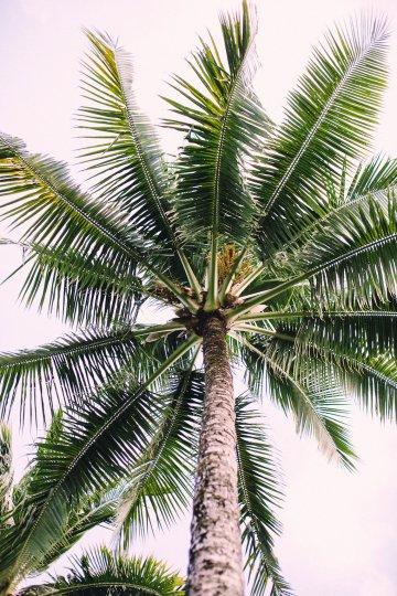 Tropical Hawaii Plantation Wedding | Naomi Wong Photography 24