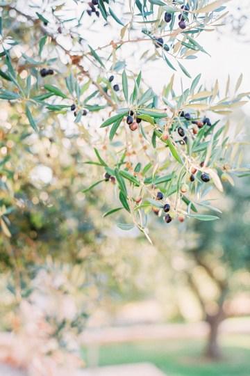 Luxe Olive Green Greek Wedding Inspiration – Elisabeth Van Lent Photography 25