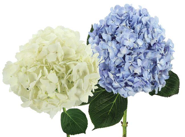 Bride & Blossom, NYC Luxury