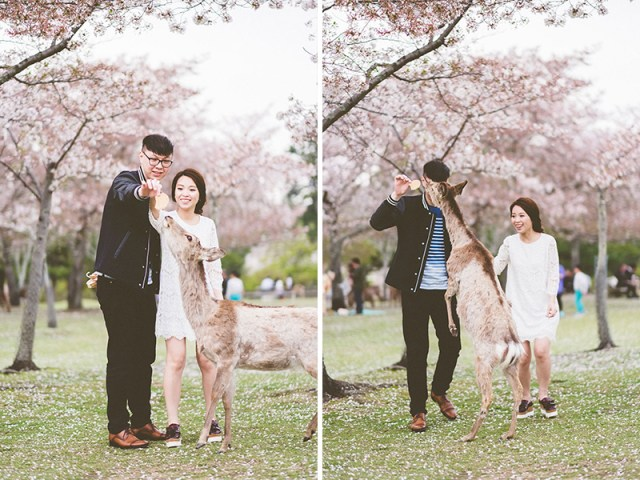 mila-story-engagement-overseas-japan-cherry-blossom-deer-outdoor-033