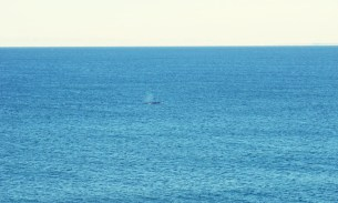 What's worth 48 hours in a bus? How about whale watching in Puerto Madryn…