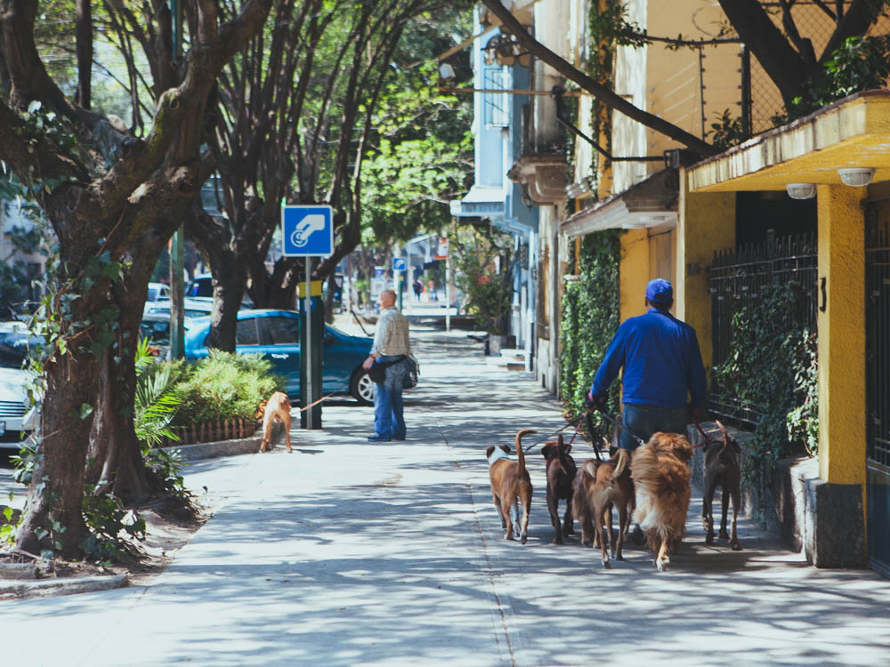 Things_to_do_in_Condesa-5