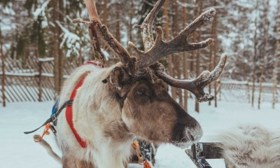 31 photos to inspire your trip to Lapland