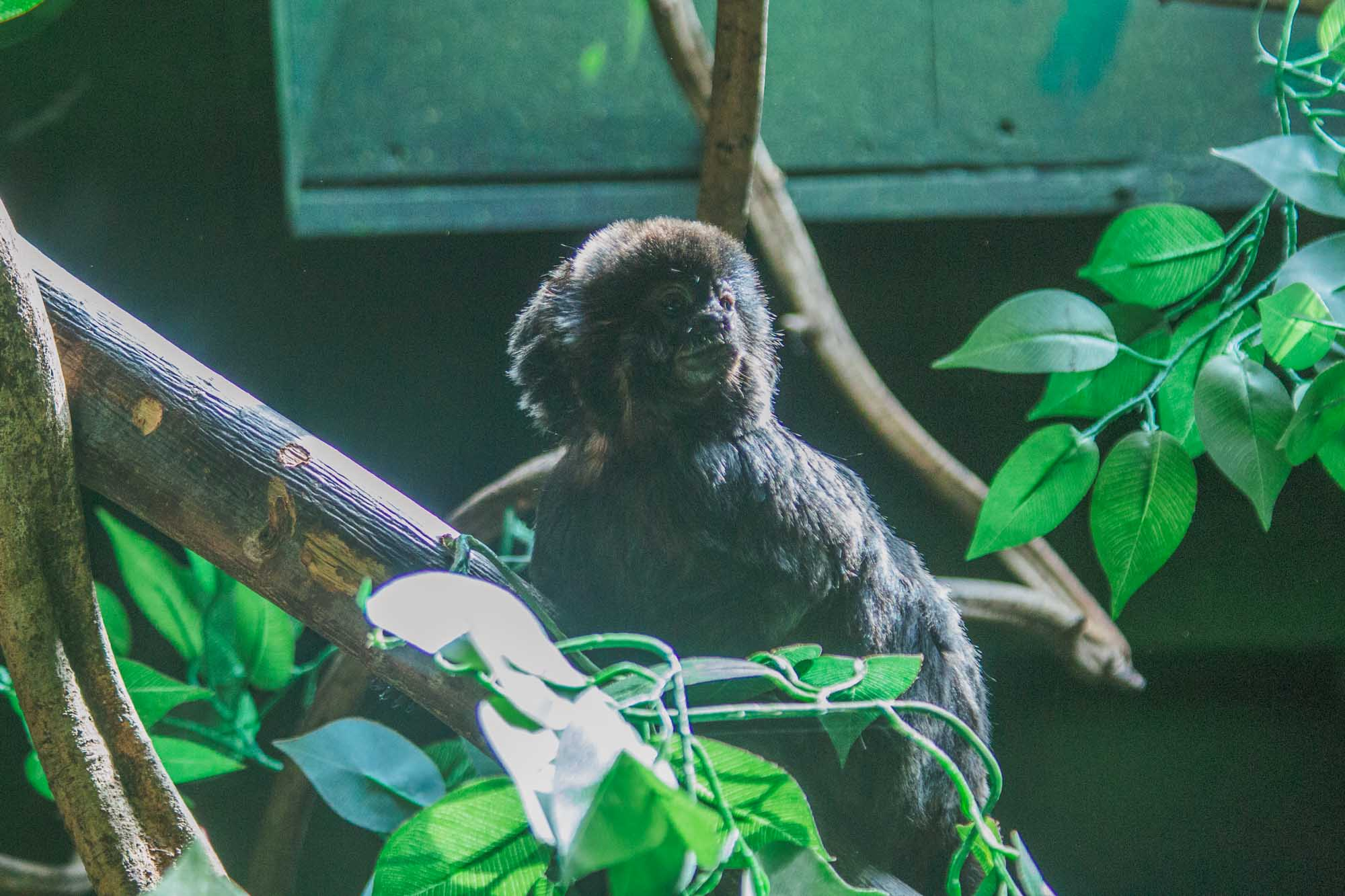 London Zoo ZSL