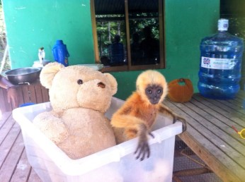 Baby monkey saved from Pet trade
