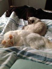 Miles & Alfie