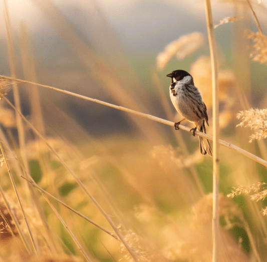 bird perched on a reed