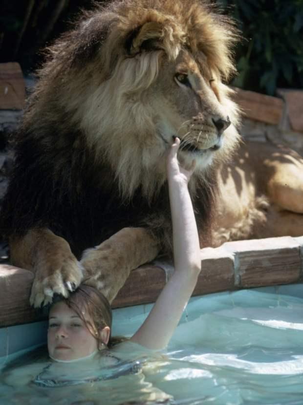 melanie griffith lion1