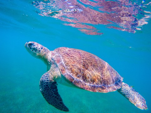 Snorkeling with Tortugas