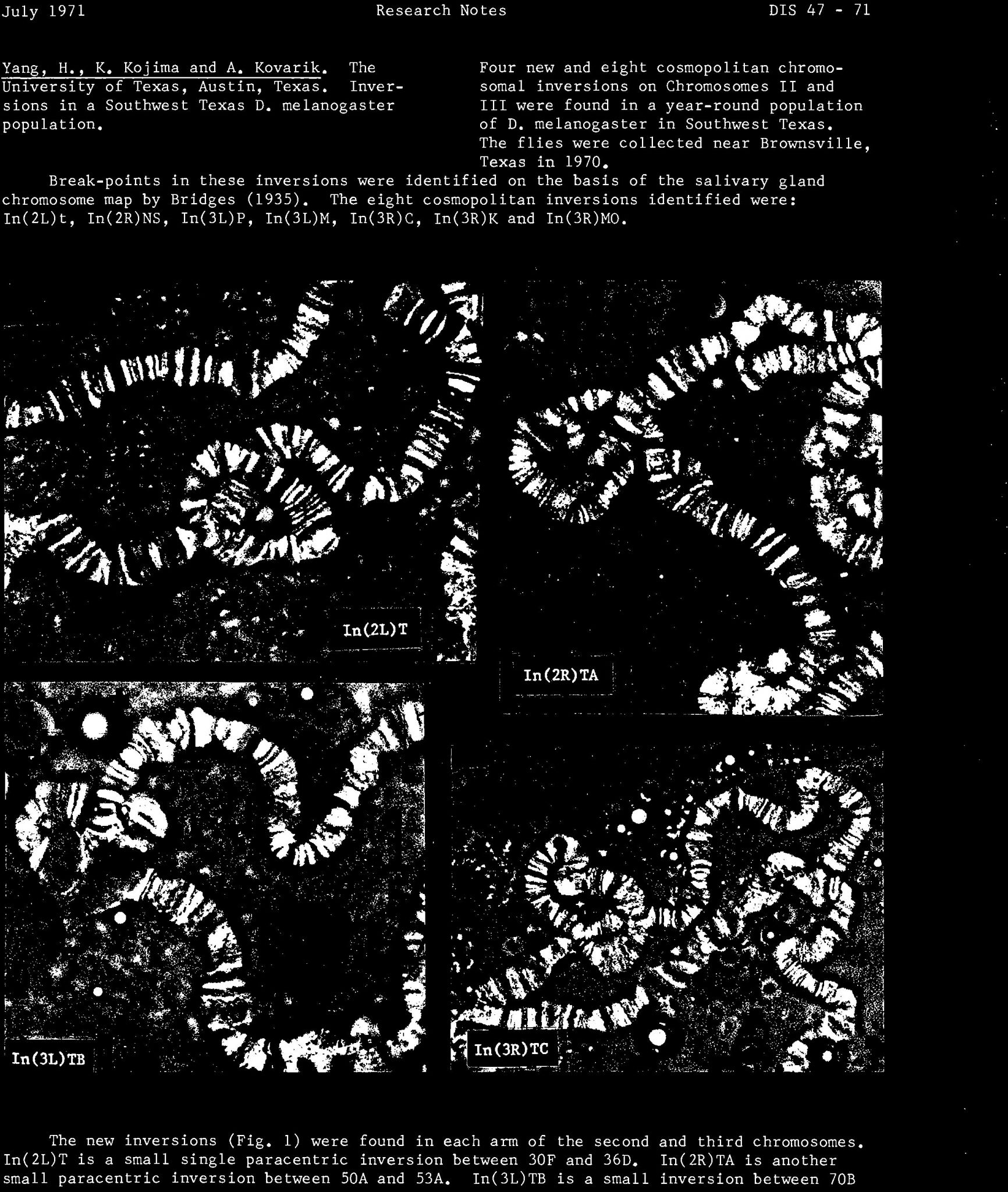 Biology Karyotype Worksheet Answers