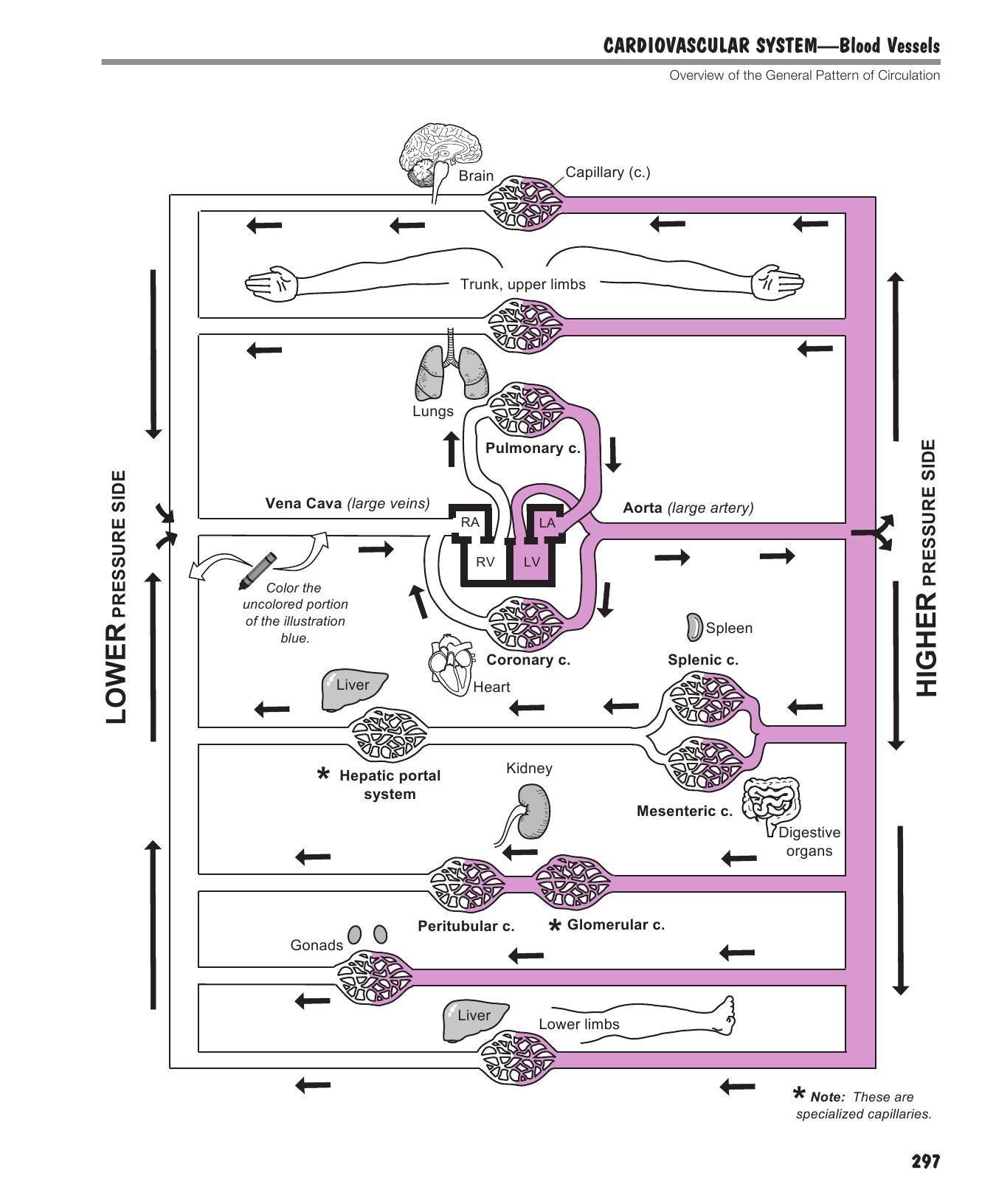 Cell Cityogy Worksheet