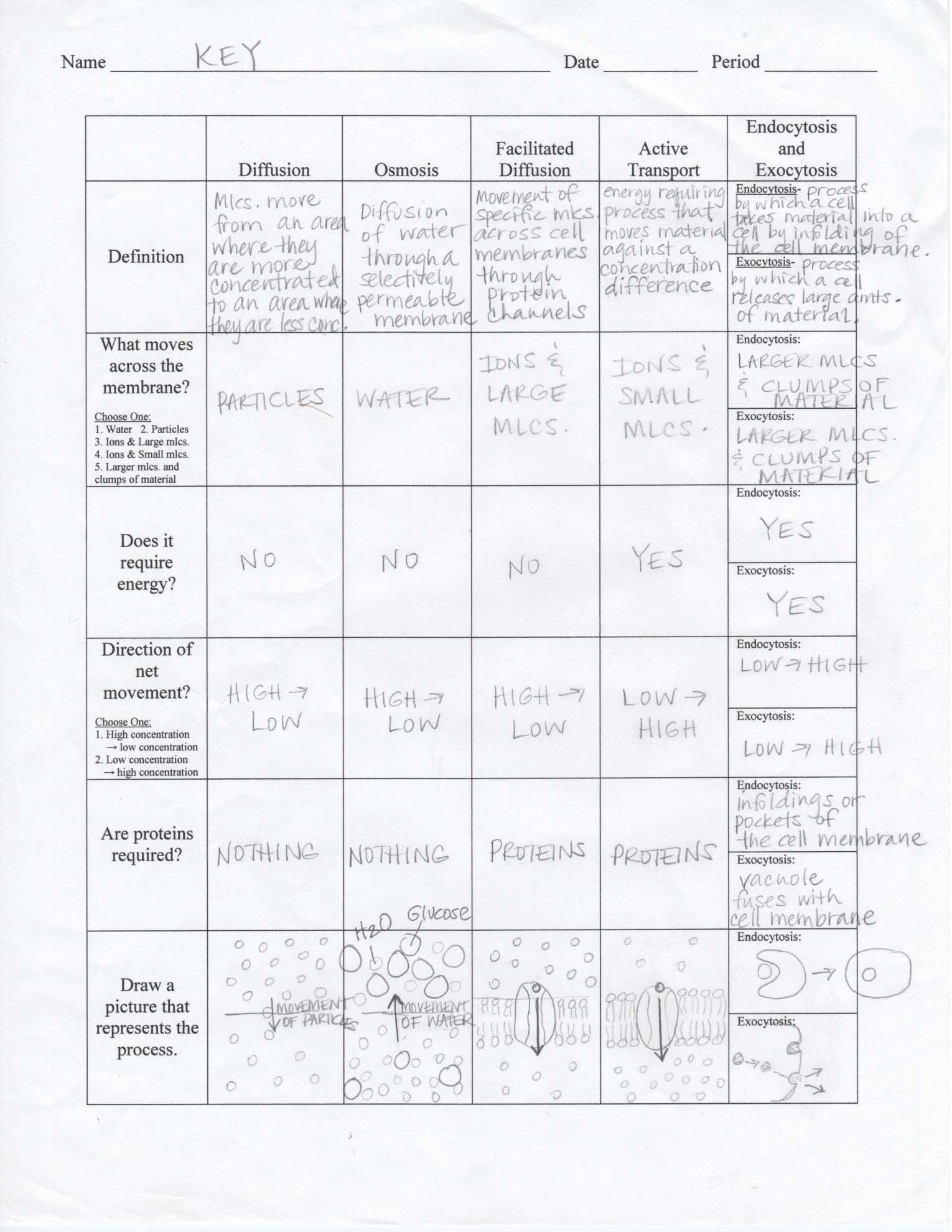 Cell Membrane And Transport Worksheet Answers