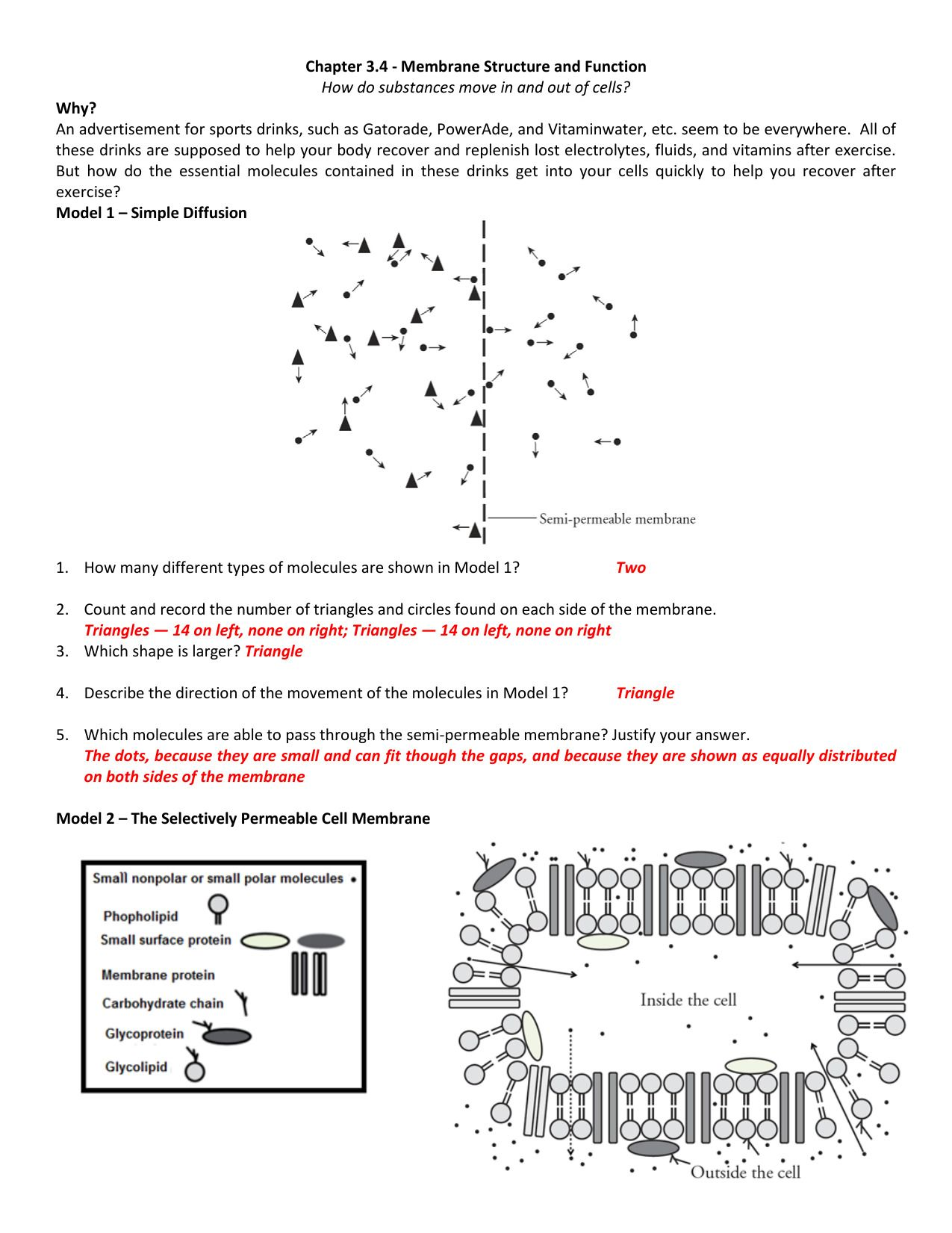 Diffusion Worksheet Answers
