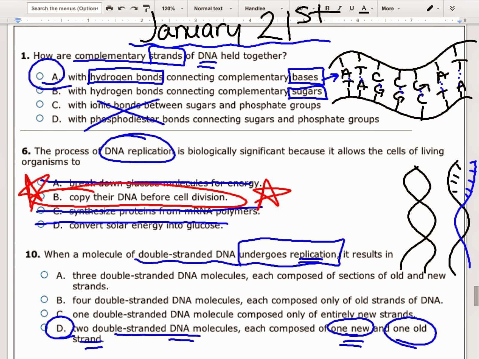 Dna Base Pairing Worksheet Answers