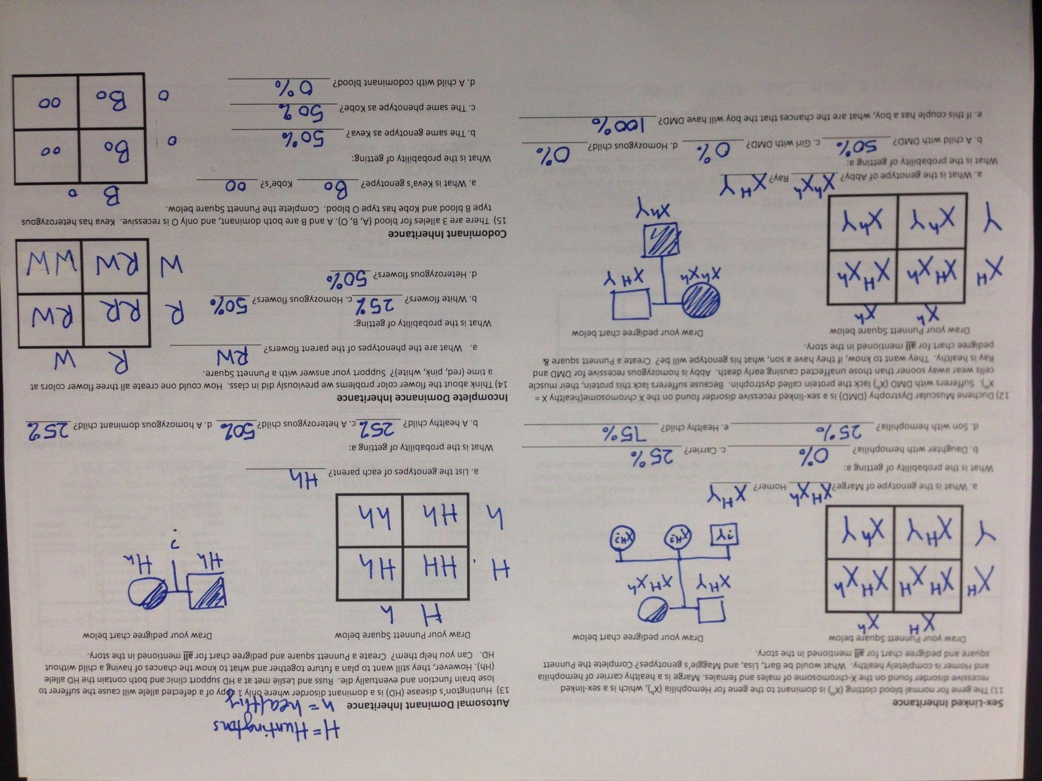 Enzyme Reaction Rates Worksheet