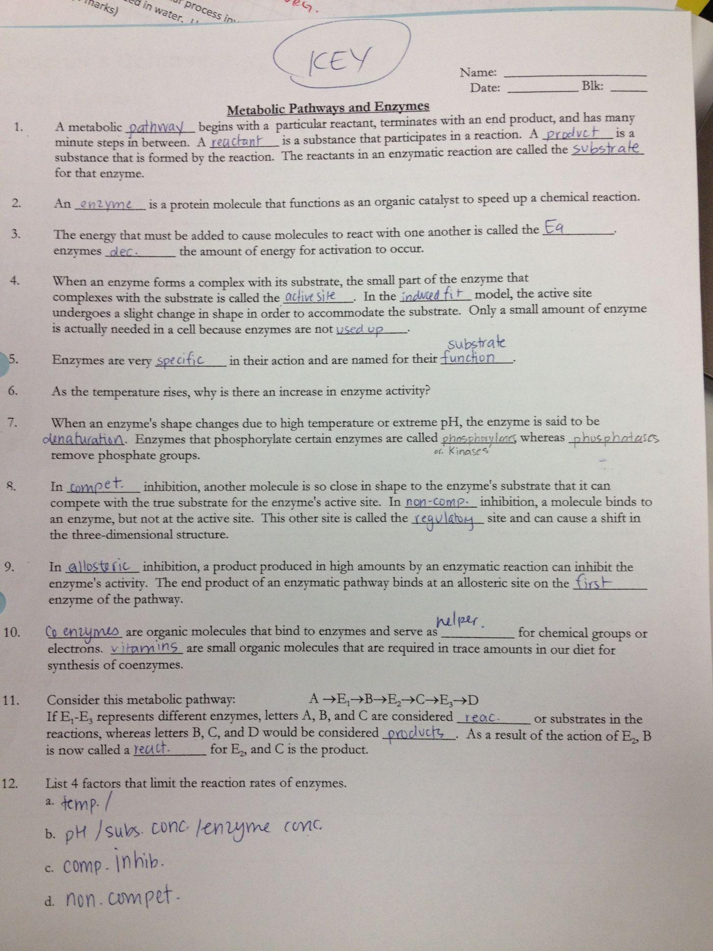 Enzyme Worksheet Answer Key