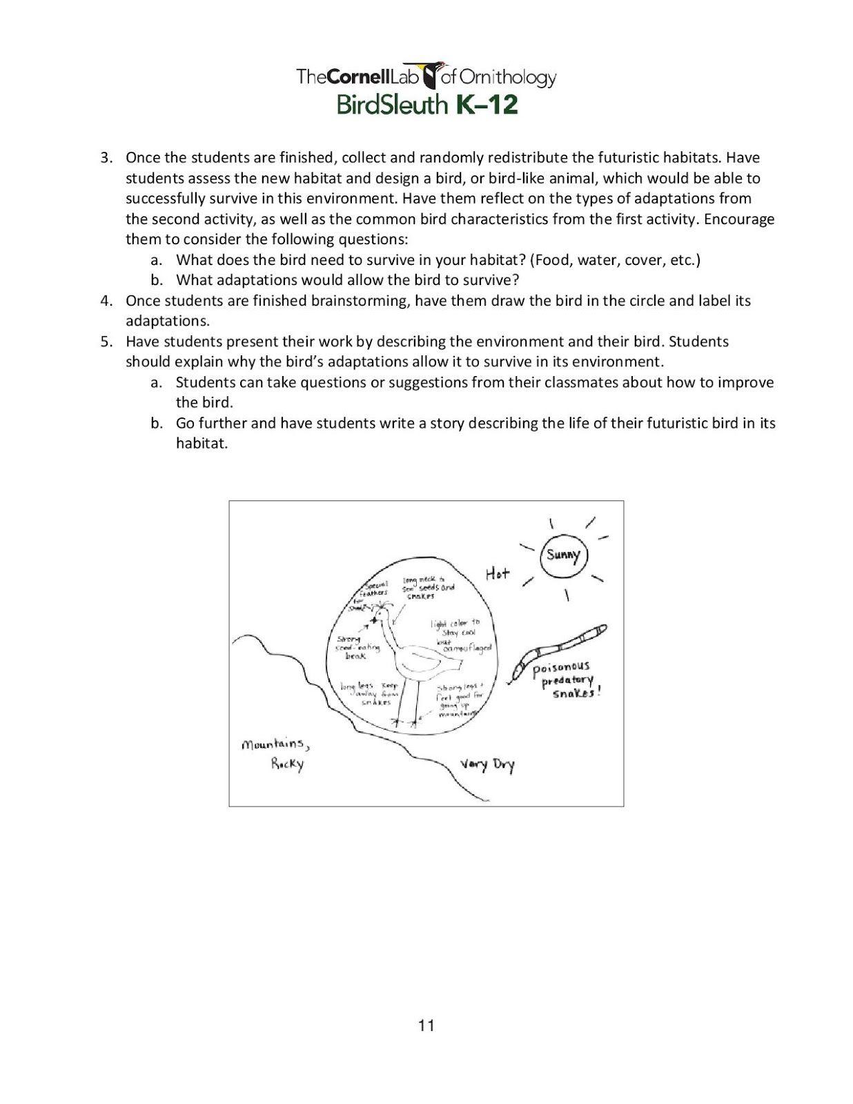 Galapagos Island Finches Worksheet