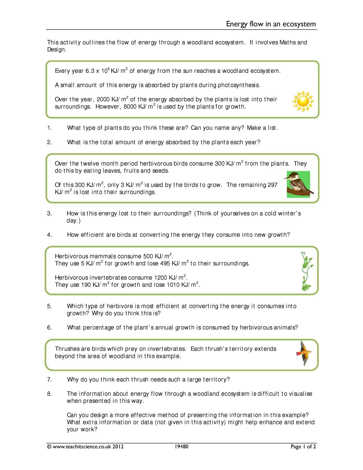 Photosynthesis Review Worksheet Answer Key