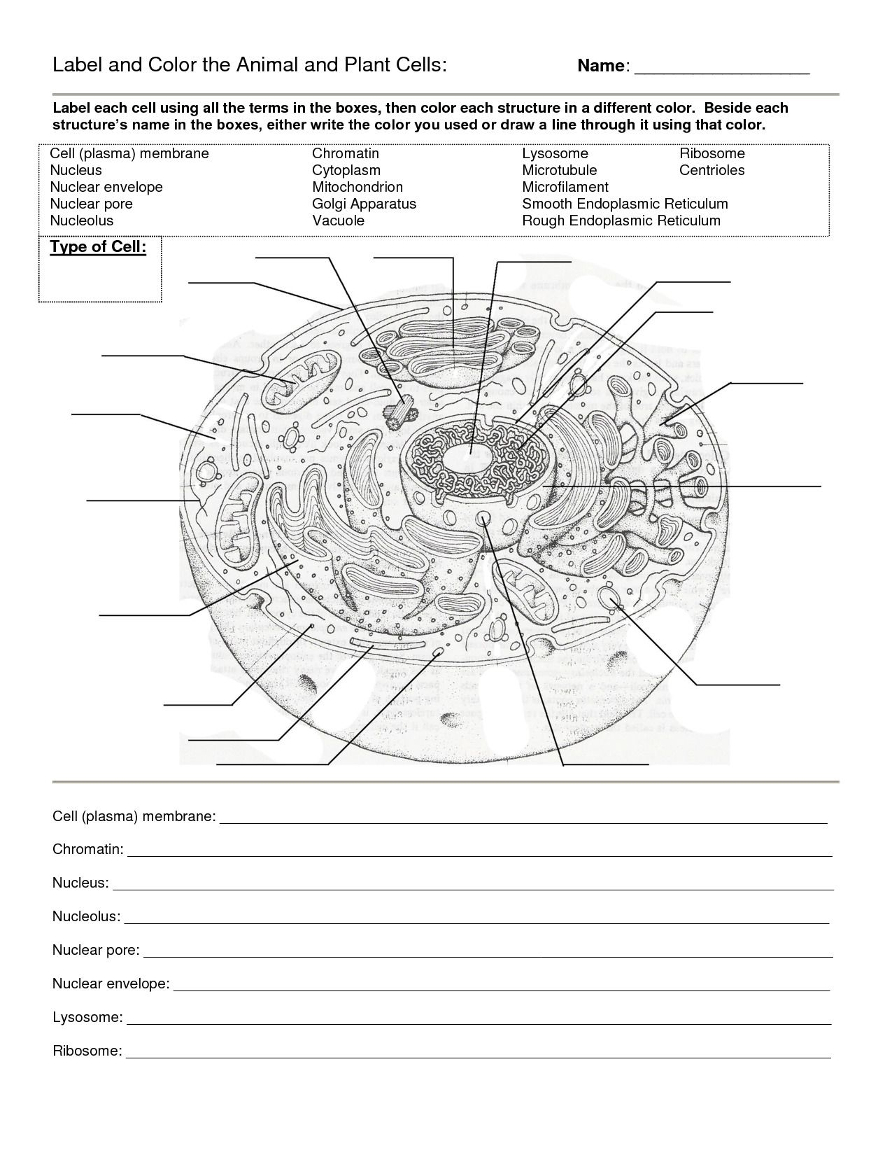 Prokaryotic And Eukaryotic Cells Worksheet Answers